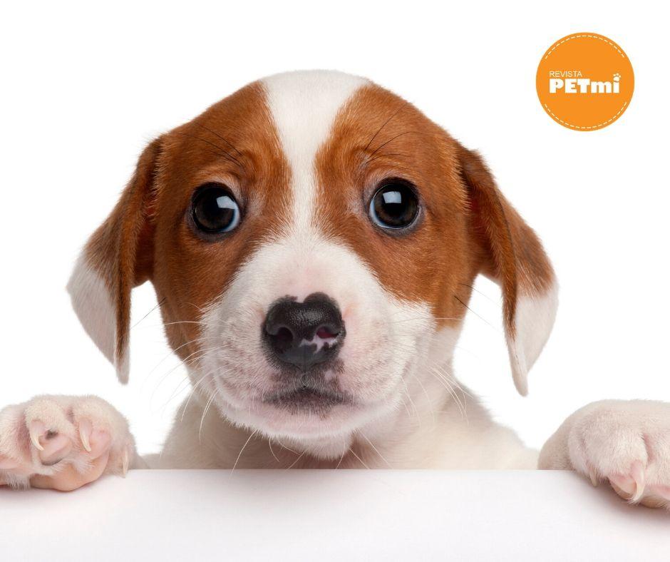 Muchos perros empiezan a llorar, a ladrar, a saltar encima, a molestar de alguna manera a sus dueños en la hora de la comida