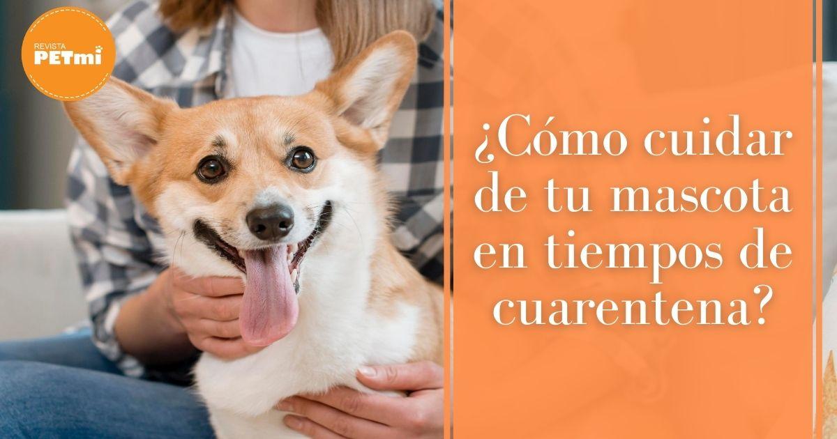 ¿Cómo cuidar de tu mascota en tiempos de cuarentena_