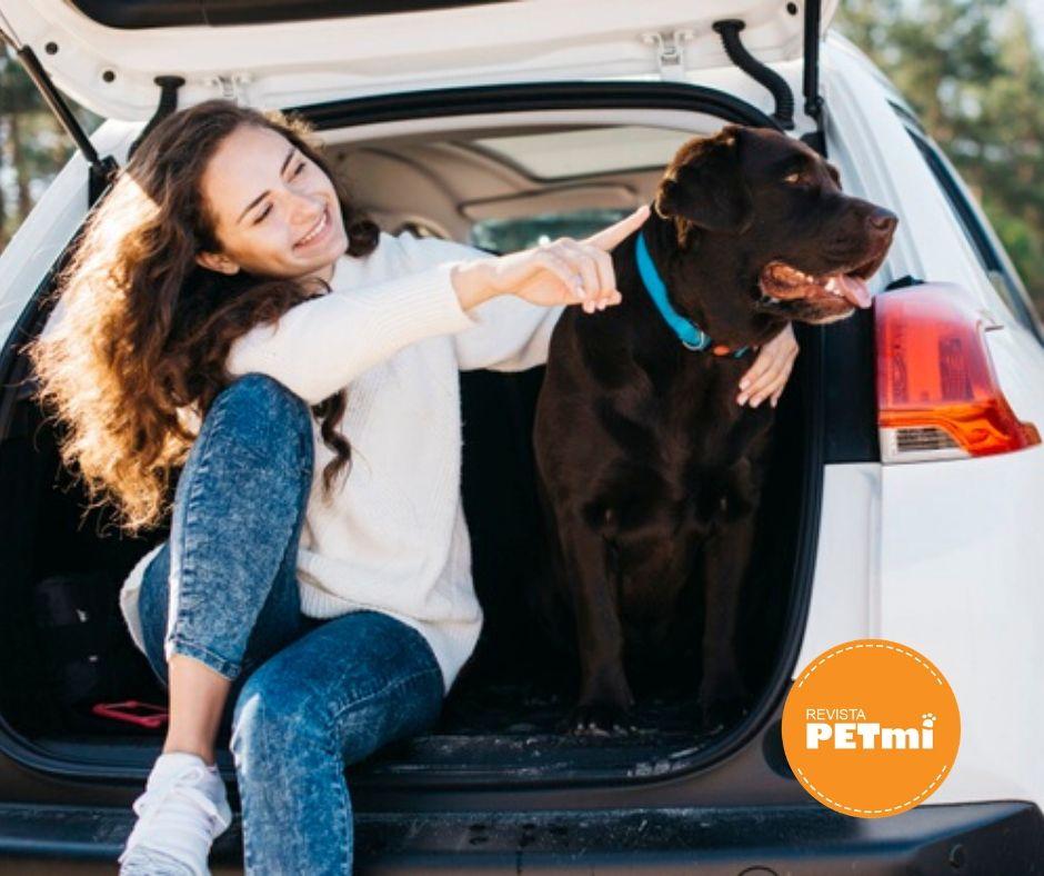 Viajar relajado es importante para el perro. Por eso es tan importante pasear y jugar durante un buen rato antes de emprender el viaje, así como mostrar un tono de voz tranquilo una vez que entra en el carro.