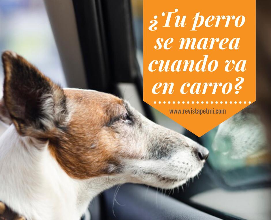 ¿Tu perro se marea cuando va en carro_ antes y después del viaje