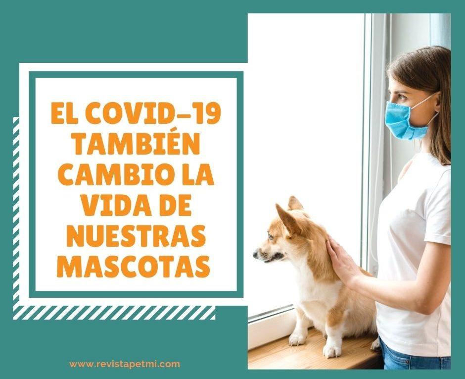 El covid 19 también cambio la vida de las mascotas