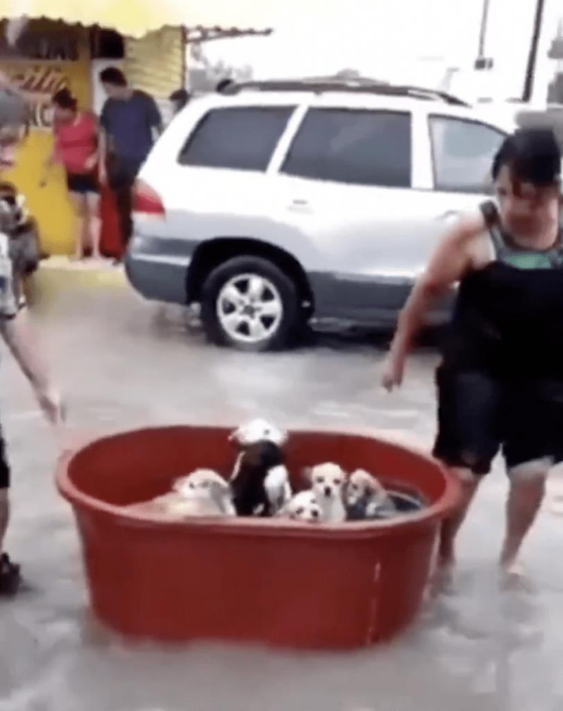 as los estragos que ha causado el Huracán Hanna en México 😔, una familia de Tamaulipas, no dudó en poner a salvo a sus 7 integrantes caninos en una tina después que su casa fue destruida por el Huracán.