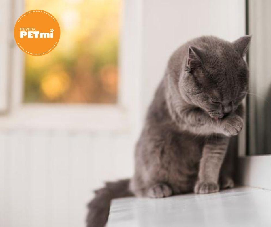 Los gatos son muy independientes y extremadamente higiénicos, dedican varias horas al día acicalándose y consiguiendo así despojarse de la suciedad