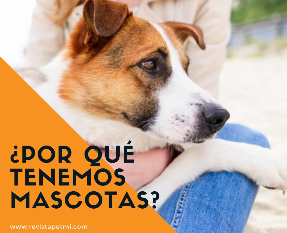 Porque tenemos mascotas, Descubrelo
