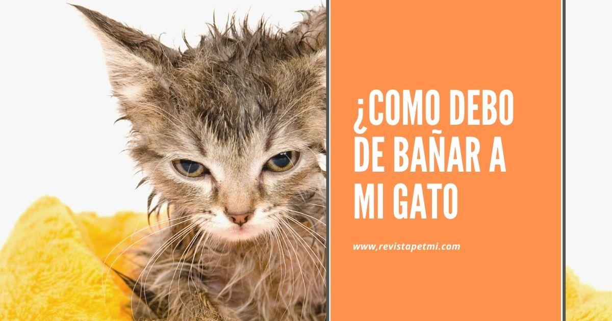 como debo de bañar a mi gato