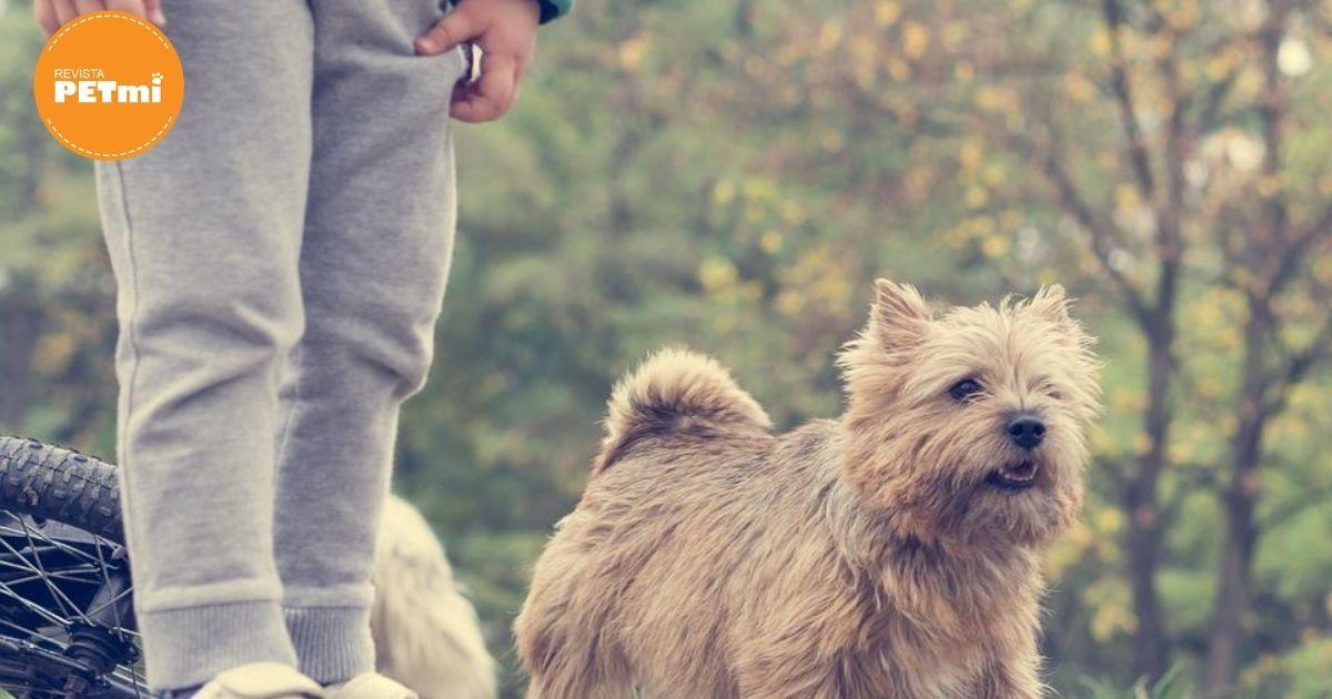 niño le pone mascarilla a su perro