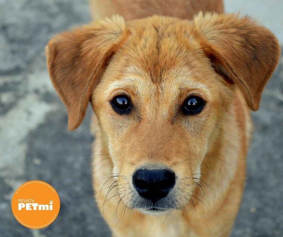 Prohiben la tenencia de perros en corea del norte, los dueños de mascotas se encuentran preocupados