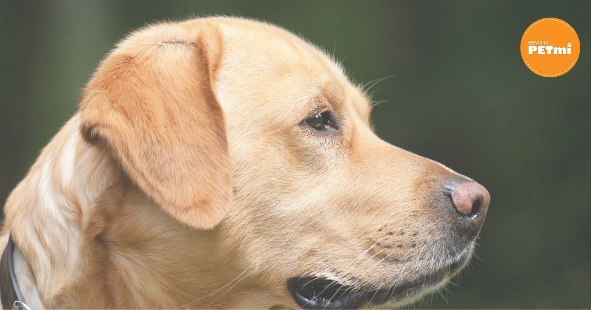 prohiben perros como mascota en corea del norte