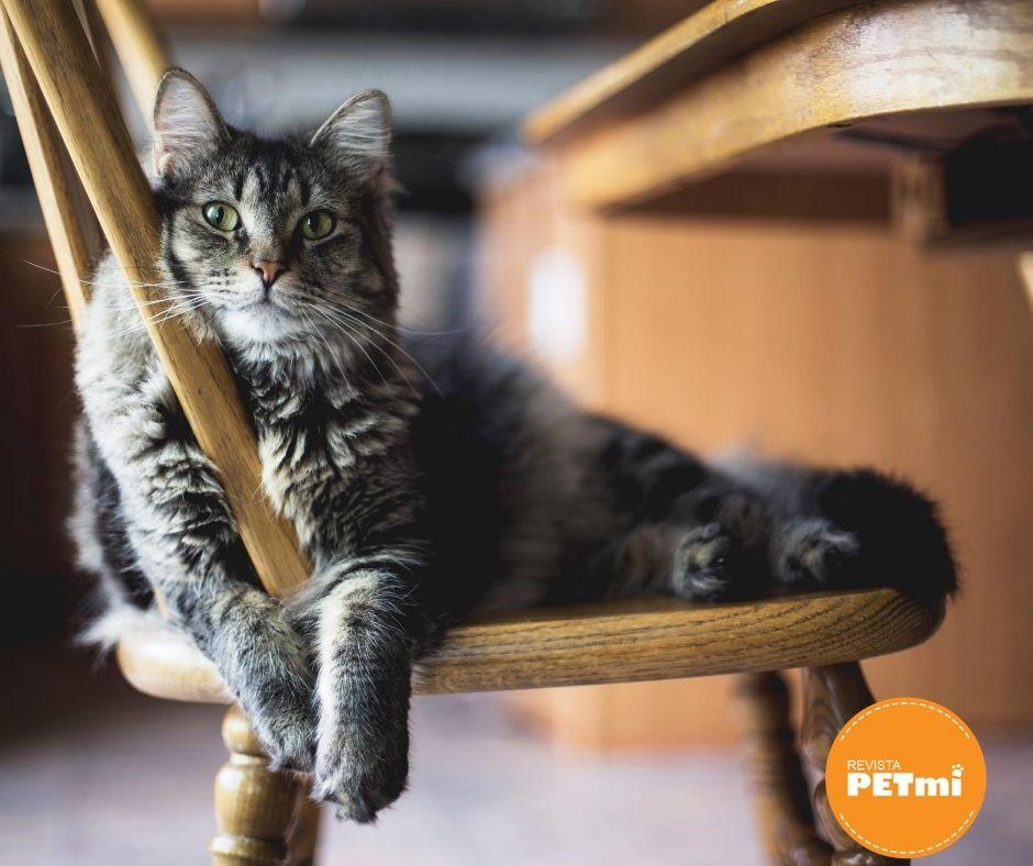 Los gatos también pueden experimentar los celos
