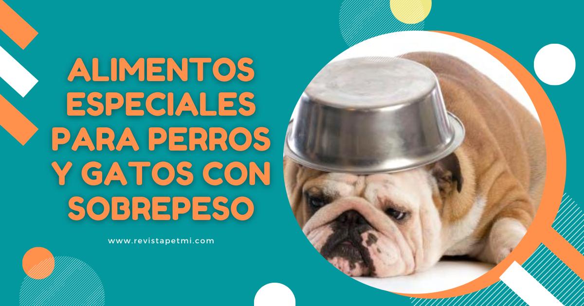 Alimentos especiales para perros y gatos con sobrepeso