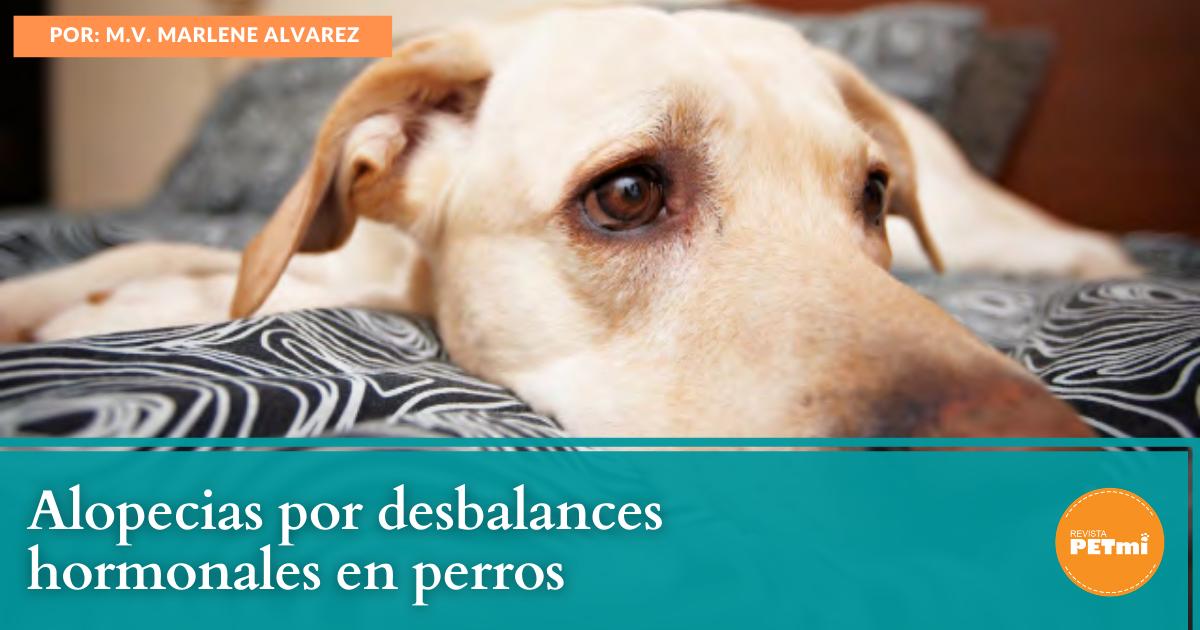 Alopecias por desbalances hormonales en perros