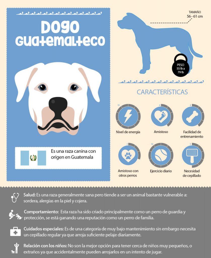 Dogo Guatemalteco
