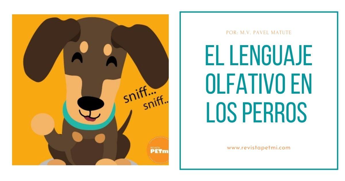 El lenguaje olfativo de los perros