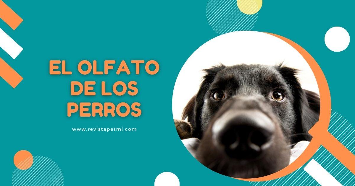 El olfato de los perros