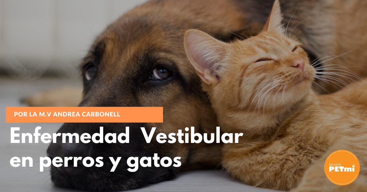 Enfermedad Vestibular en perros y gatos (1)
