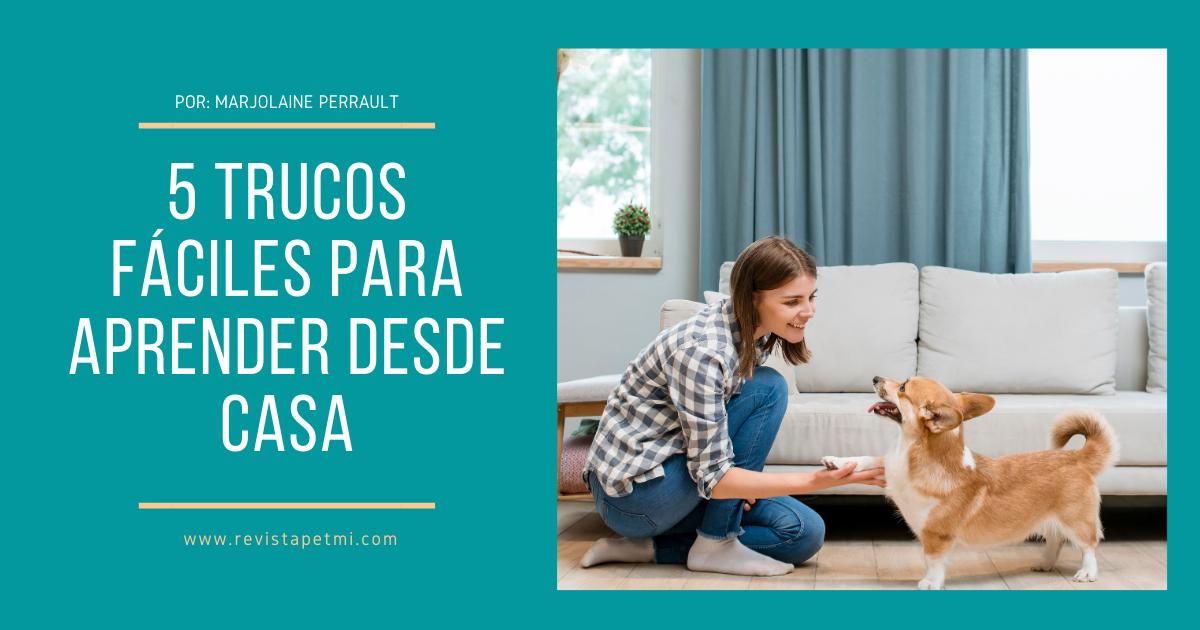 Enseña a tu perro 5 trucos fáciles para aprender desde casa