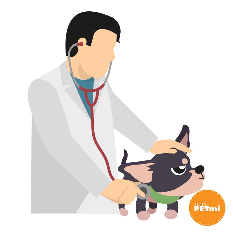 Factores que pueden hacer enojar a un perro, visitas al veterinario