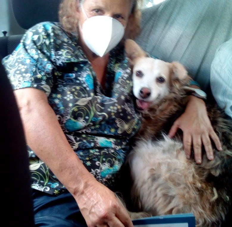 Doña Vero necesita seguir alimentando a más de una decenas de perritos sin hogar