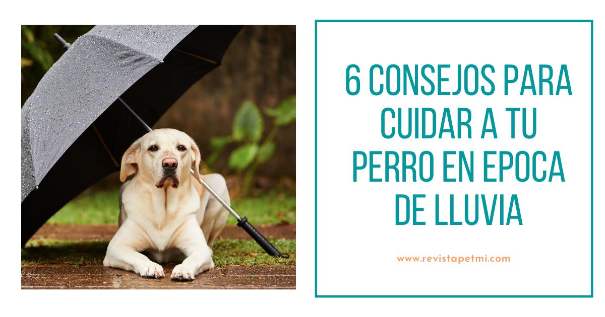 consejos para cuidar a tu perro en epoca de lluvia