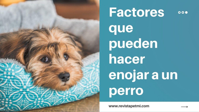 factores que pueden hacer enojar a un perro