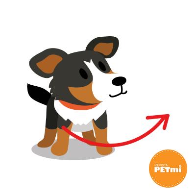 Dibujar una curva, saludo entre perros