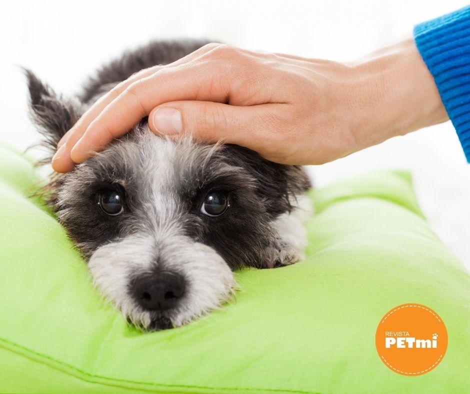 Cuidados post operatorios en perros y gatos: Ropas Protectoras post quirúrgicas de PET MED