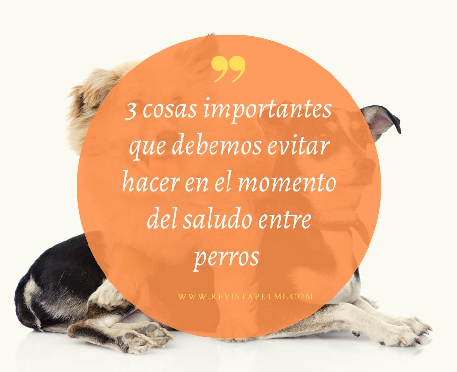 El saludo de los perros (1)