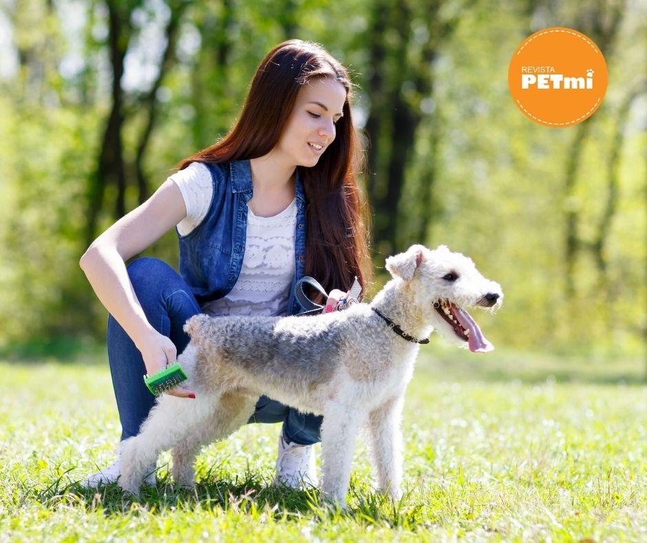 El Saludo entre perros y personas