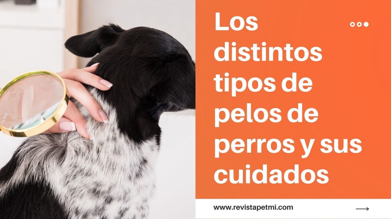 Los distintos tipos de pelos perros y sus cuidados