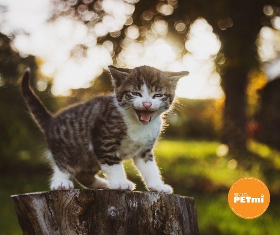 Los ojos y la comunicación con gatos