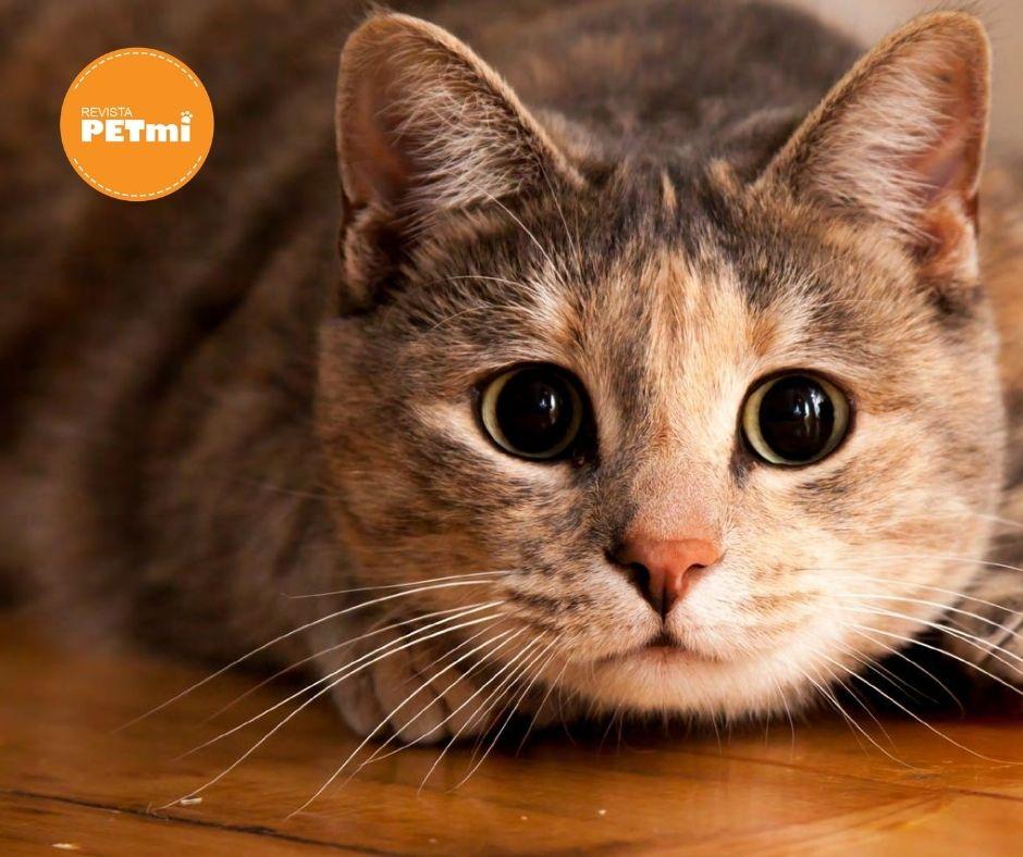Los ojos y la comunicación con nuestros gatos