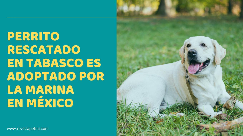 Perrito rescatado en Tabasco, ahora es integrante de la Marina en México