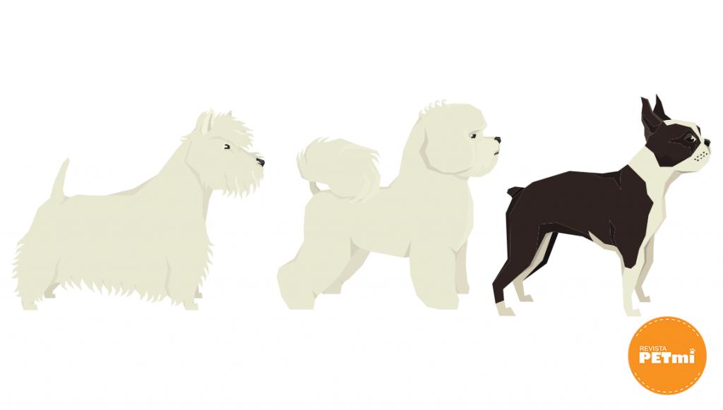 Los perros de pelo corto  (De 1 a 4 cm. de largo)