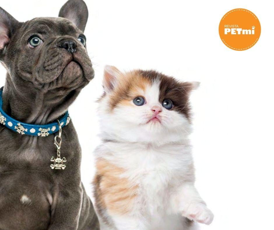Castración o Esterilización de perros y gatos: Debo castrar a mi mascota?