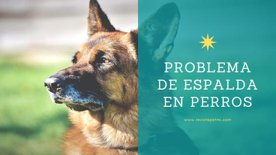 Problema de espalda en perros