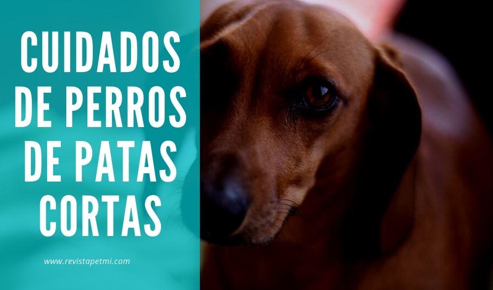 cuidados de perros de patas cortas nuevo