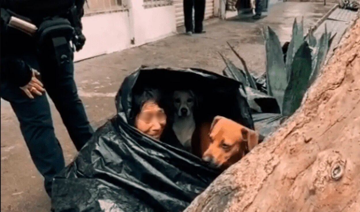 abuelita vivía junto a sus perritos