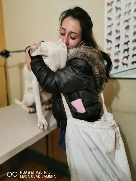 Encuentran a Siena, la perrita que escapó de casa a causa de la pirotecnia en Navidad 1
