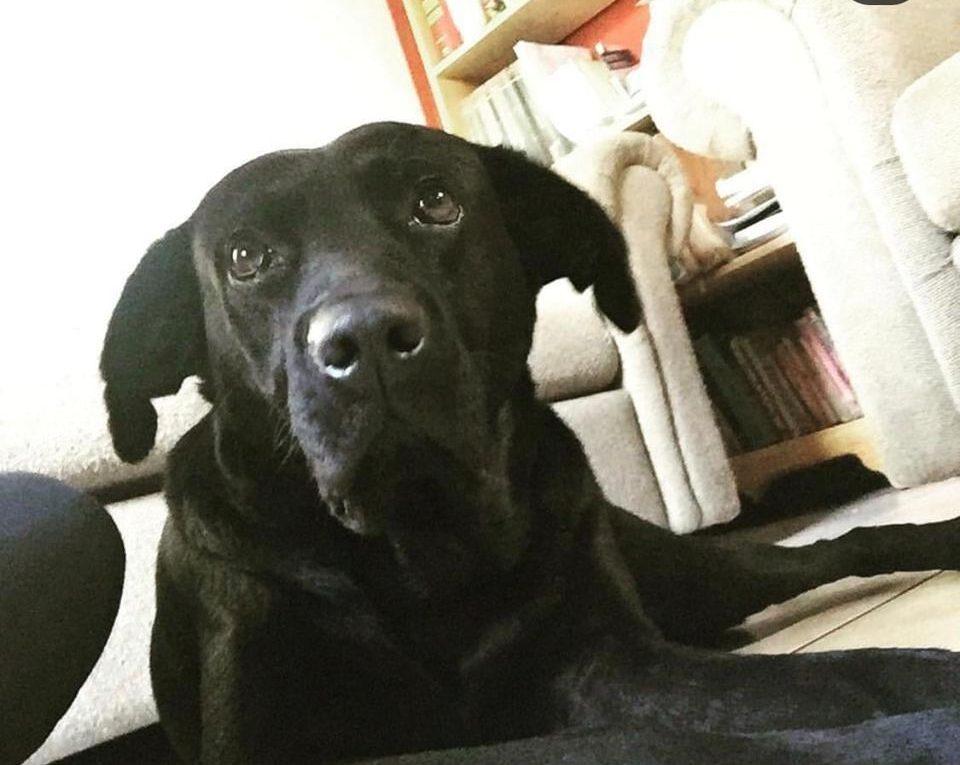 Joven ilustrador vende retratos para salvarle la vida a su perro