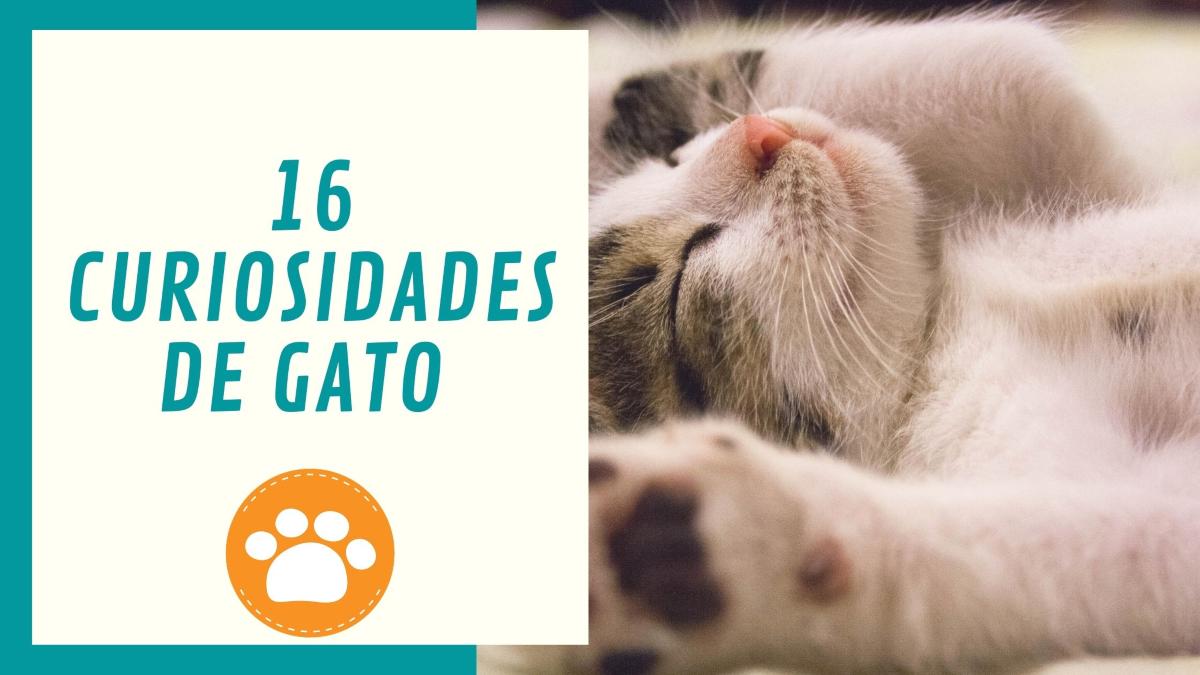 16 curiosidades de gatos , el mundo mágico gatuno