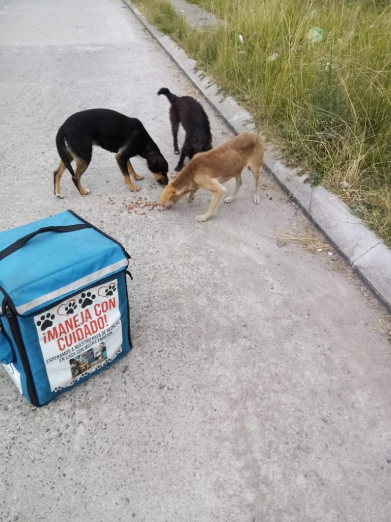 Joven alimenta a perritos de la calle
