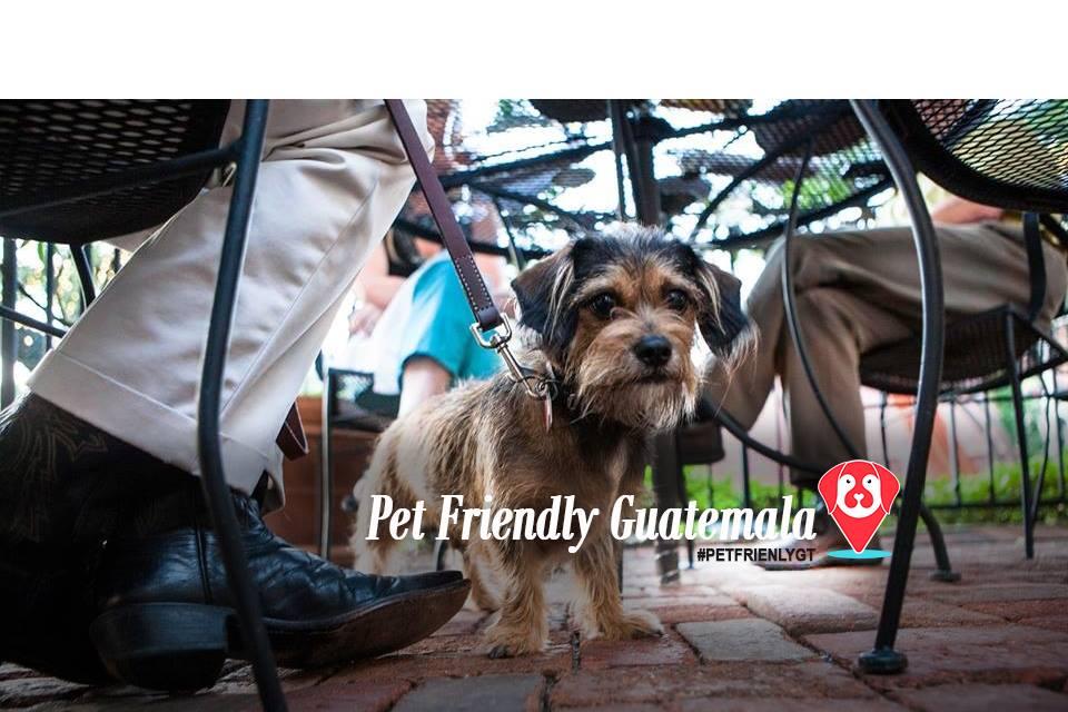Lugares Pet Friendly en guatemala