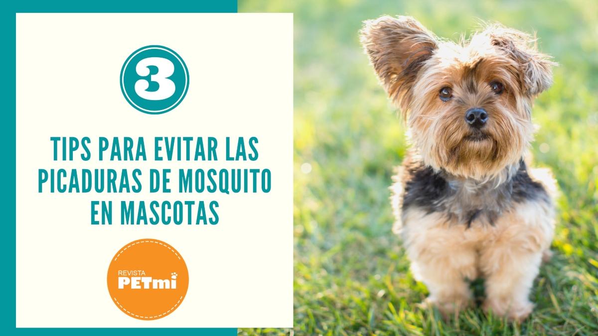3-Tips-para-evitar-las-picaduras-de-mosquito-en-mascotas-2
