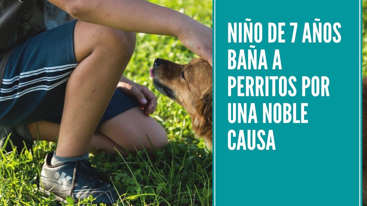 Nino-de-7-anos-bana-a-perritos-por-una-noble-causa
