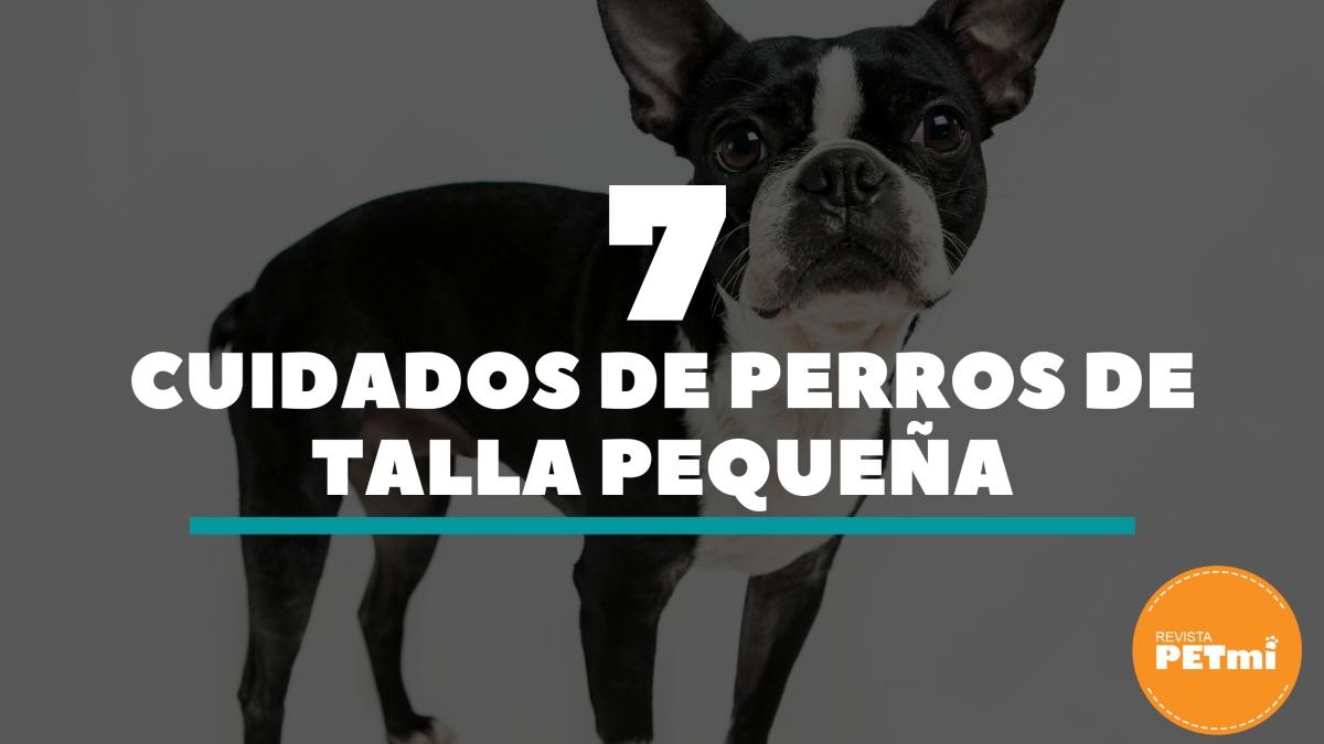 cuidados de perros de talla pequeña