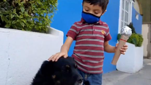 pequeño hace reportaje sobre los perros de la calle