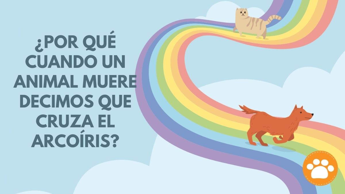 Puente arcoíris
