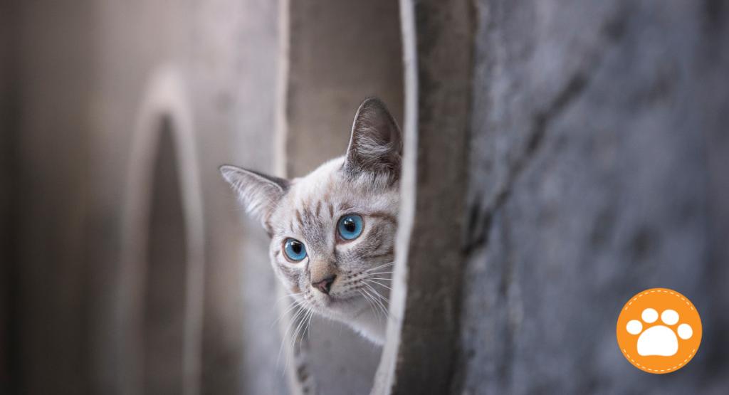 Las uñas y los bigotes de los gatos, la longitud de los bigotes equivale a la anchura de su cuerpo, lo que les permite calcular los espacios por donde pueden o no pasar.