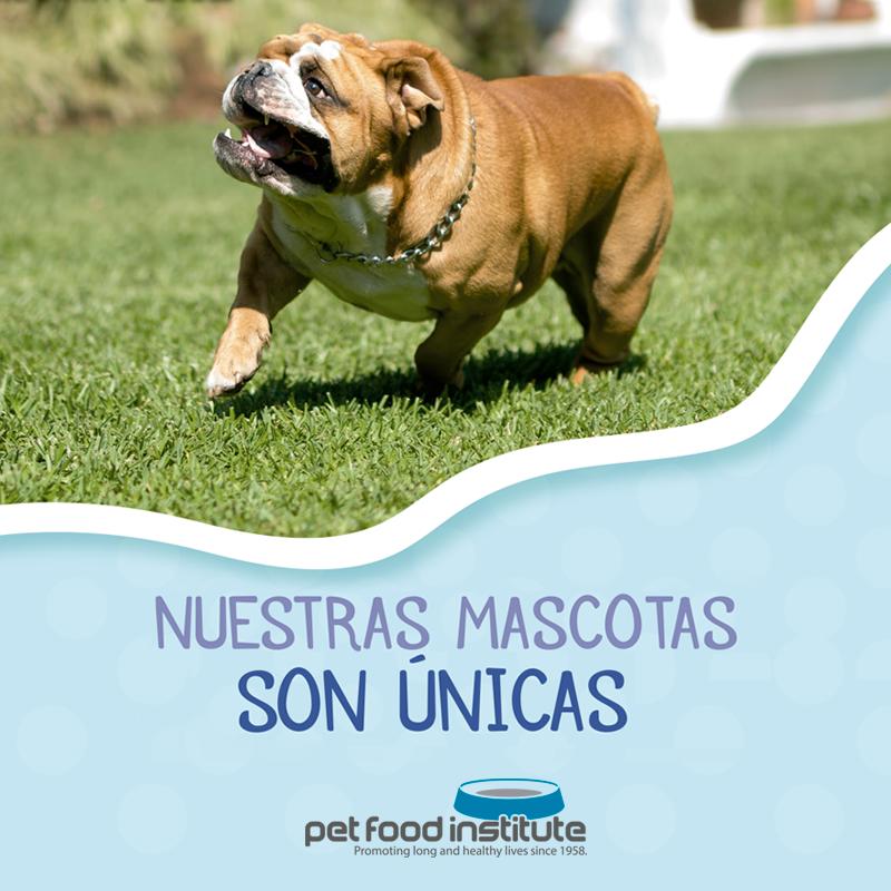 Revisa con frecuencia las uñas y bigotes de tu gato, recuerda siempre hacer visitas regulares al médico veterinario y cuidar a tu mascota ofreciéndole un alimento balanceado Premium o Super Premium de calidad.