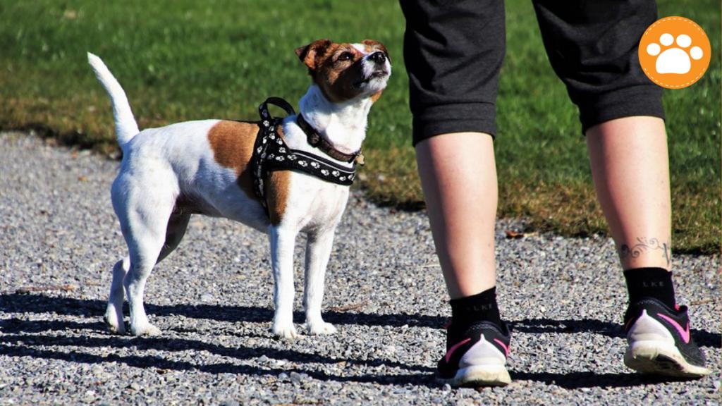Perros guías podrán acompañar a sus humanos en instalaciones deportivas